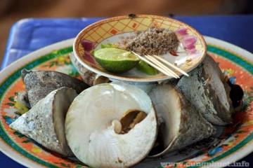 Tour cù lao chàm từ đà nẵng
