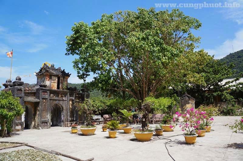 Tour Cù Lao Chàm 1 ngày từ Đà Nẵng